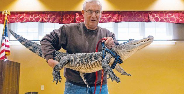 joie-henney-alligator-484-1